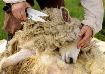 Стрижка овець